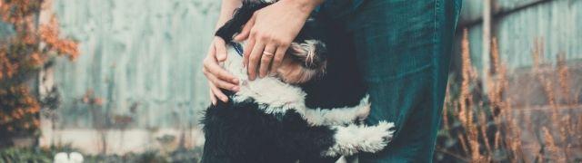 Todo lo que necesita tu mascota
